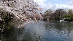 桜井之頭公園